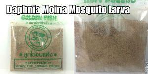 Dried Daphnia Moina Mosquito Larva for Betta fish