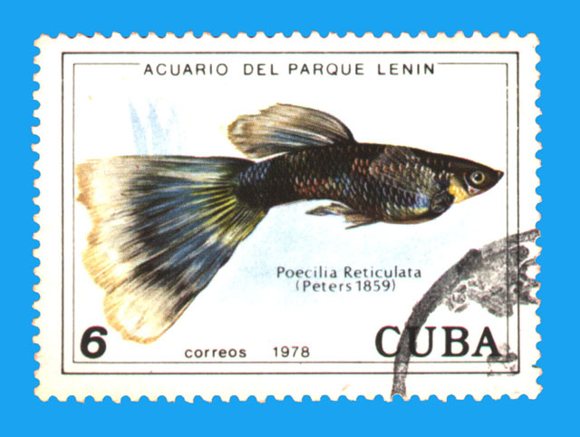 Cuban Guppy Stamps