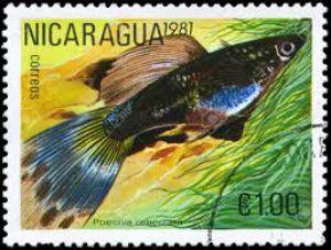 Nicaraguan Guppy Stamps