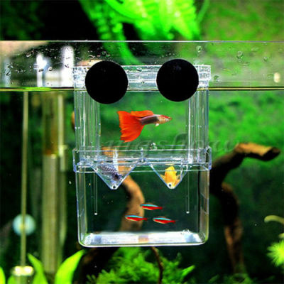 Multifunction Isolation Box for Guppy Fish