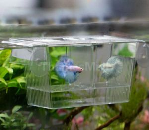 Guppy breeding box with FREE Shipping